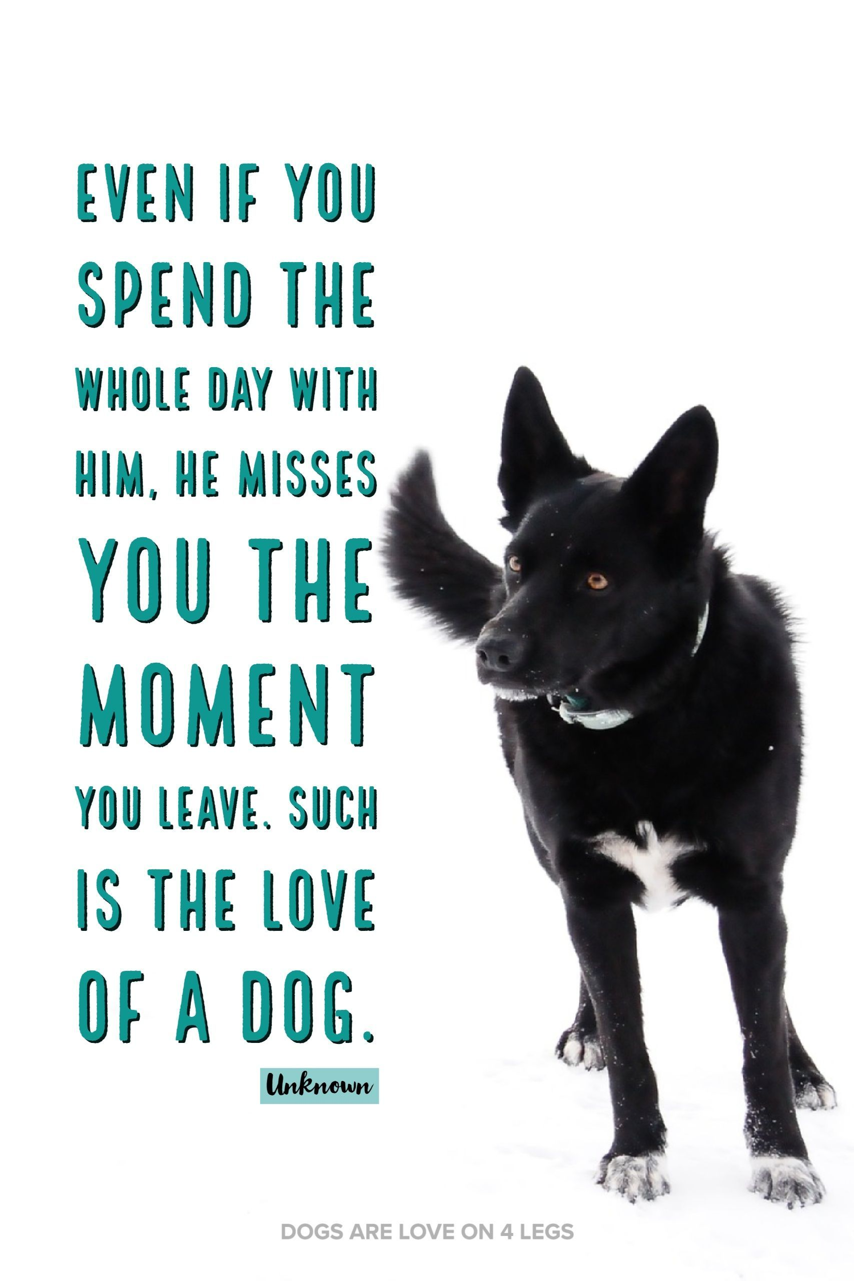 Even I You Spend The Whole Day With Him      Dog, Dog Quotes