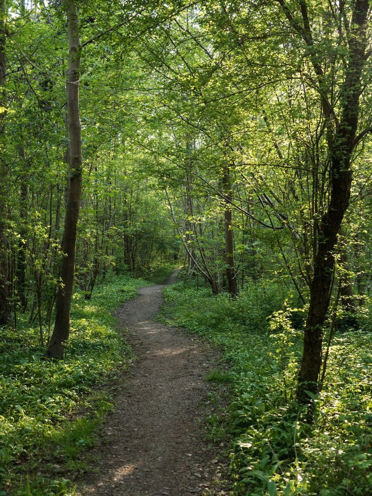 A Walk In The Woods The Most Peaceful Place To Be Landscape Nature Photos Scenery