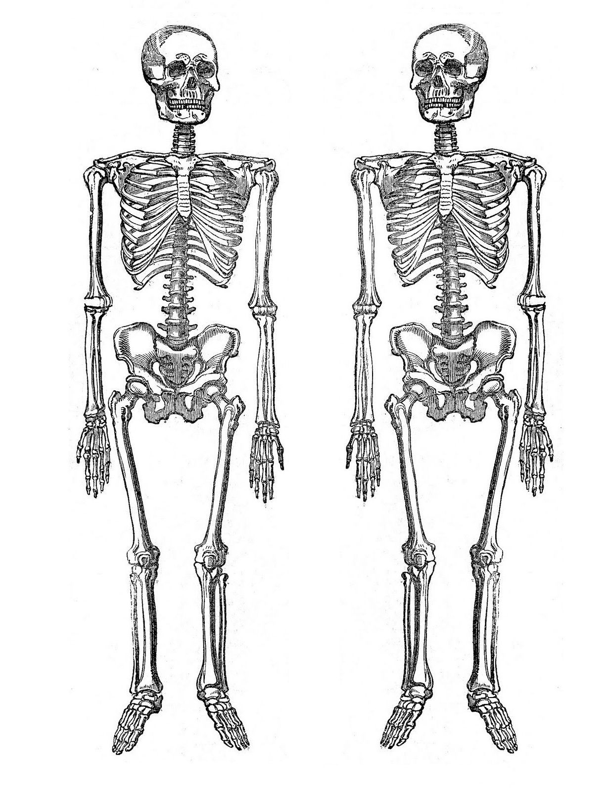 Printable Party Decor: Clip on Skeletons | Halloween ...