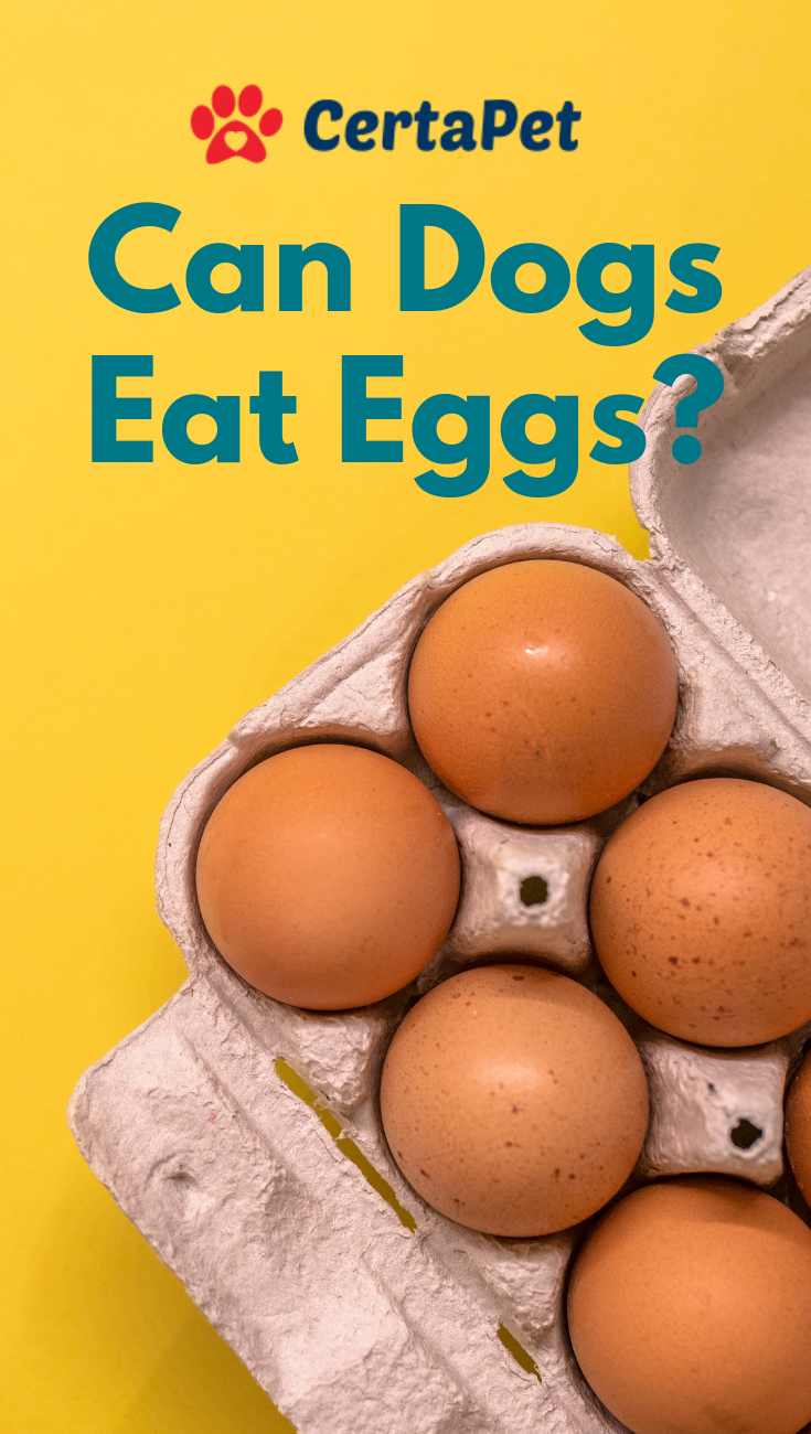 Can Dogs Eat Eggs And Are Eggs Good For Dogs Certapet Can Dogs Eat Eggs Dog Eating Eggs For Dogs