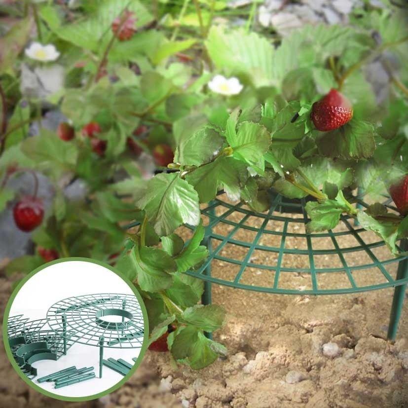 Beautiful Erbeer Reifer halten Schnecken und Pilze von den leckeren Erdbeerfr chten fern Gefunden auf FernGarden