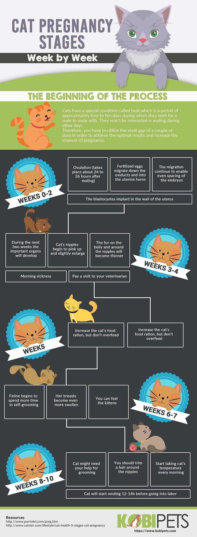 Pregnant Cat Labor Signs, Behavior And Timeline Evcil