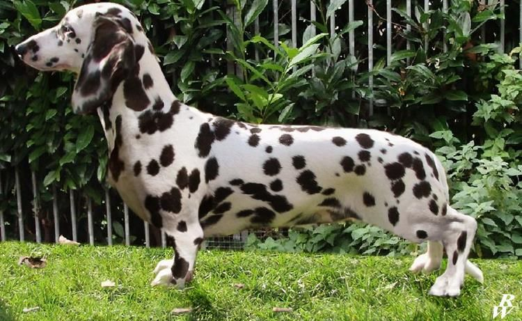 These Are The Rarest And Most Stunning Dogs In The