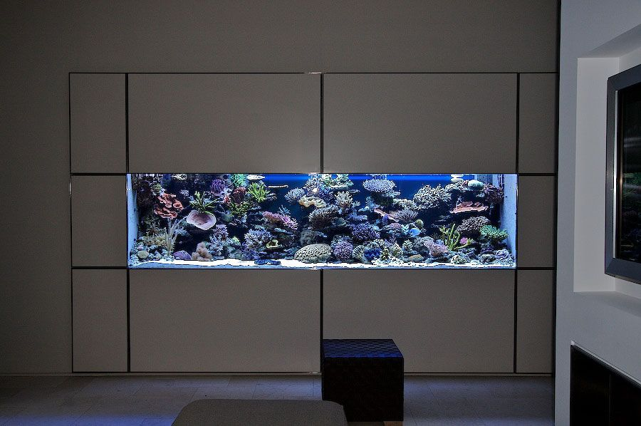 In wall aquarium to be put into existing shelving isseys for Fish tank in wall
