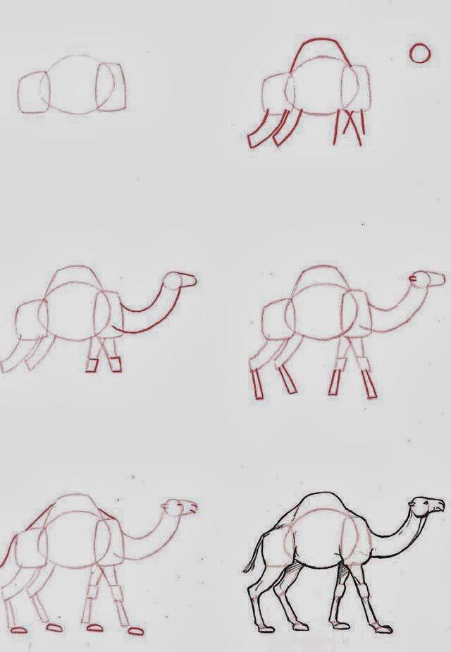 Apprendre A Dessiner Un Dromadaire Mouton Dessin Dessin D Animal Dessin