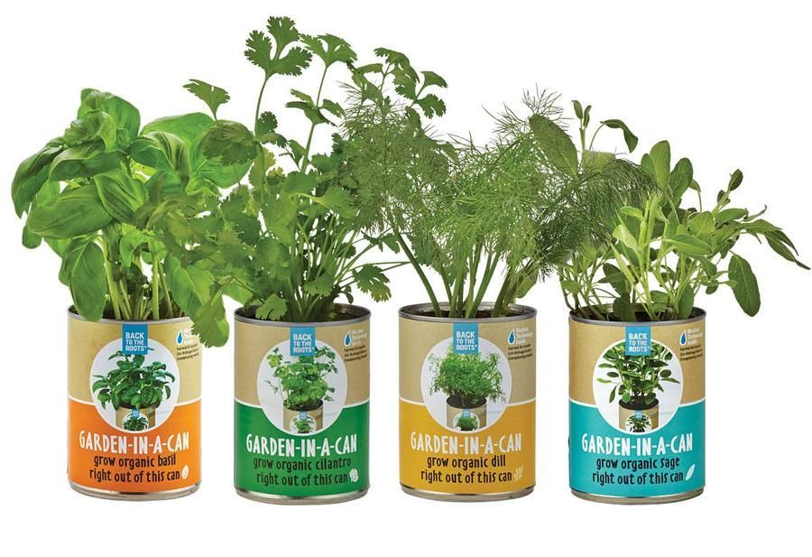 Organic Indoor Herb Garden Kit Indoor garden herb garden indoor herb garden herb garden kit indoor indoor garden herb garden indoor herb garden herb garden kit indoor herb garden kit grow kit workwithnaturefo