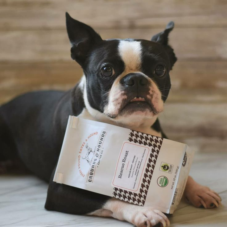 Grounds and Hounds Coffee Review + Coupon Discount Promo