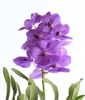 Purple flower names enlisted with a beautiful photo gallery purple flower names mightylinksfo