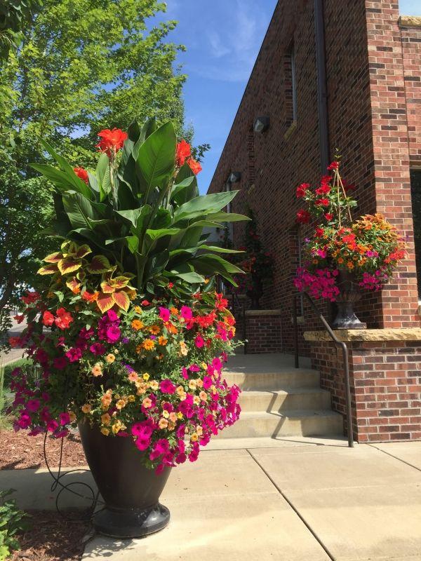 Calibrachoa Coleus Canna Container Garden Design Flower Pot