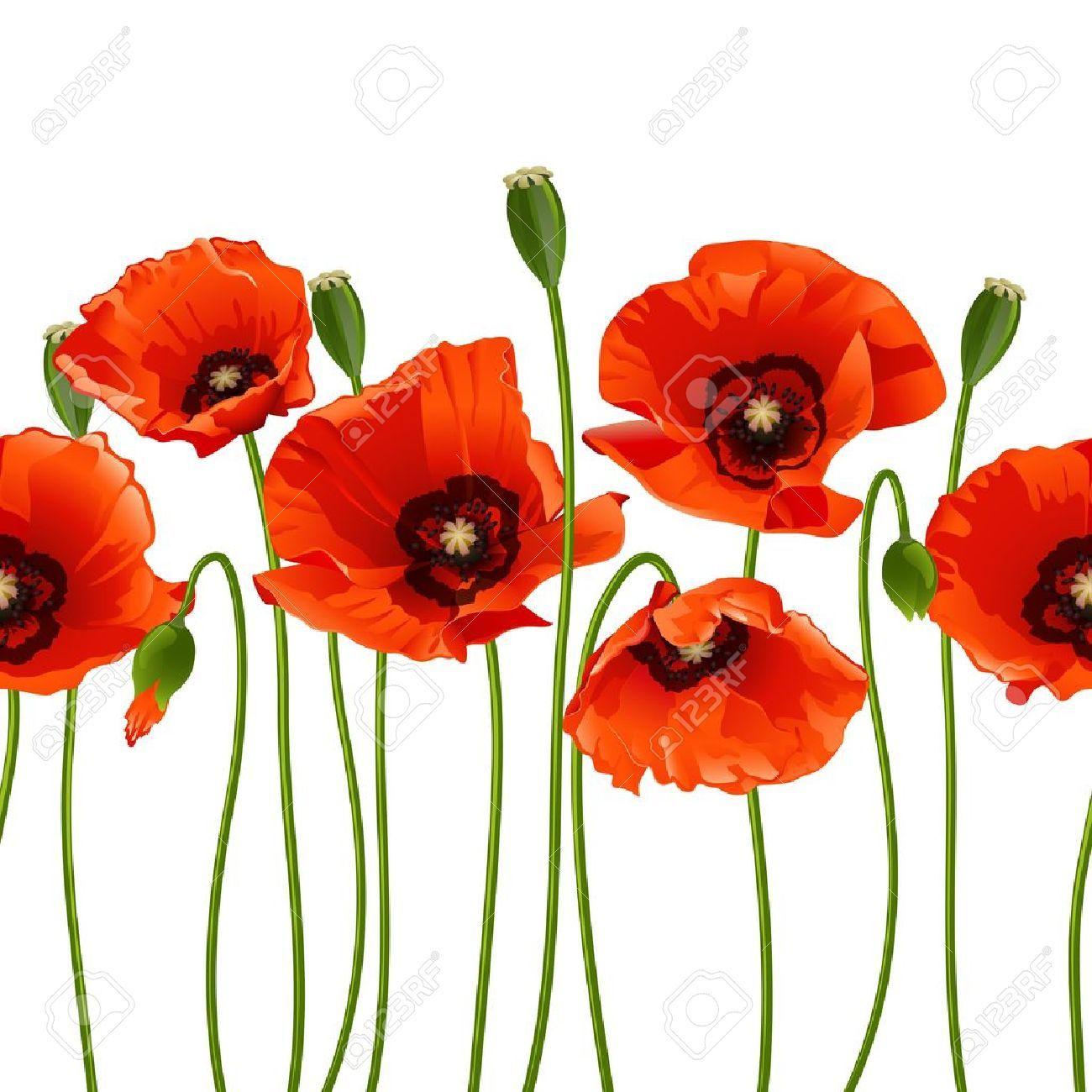 Rote Mohnblumen In Einer Reihe Isoliert Auf Weissem Hintergrund Vektor Illustration Mohn Rot Rote Mohnblumen Mohnblume