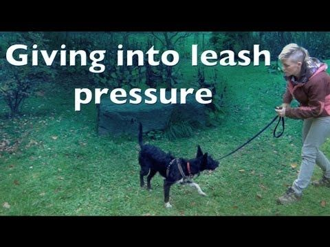 Giving Into Leash Pressure Clicker Dog Training Shy Reactive Dogs