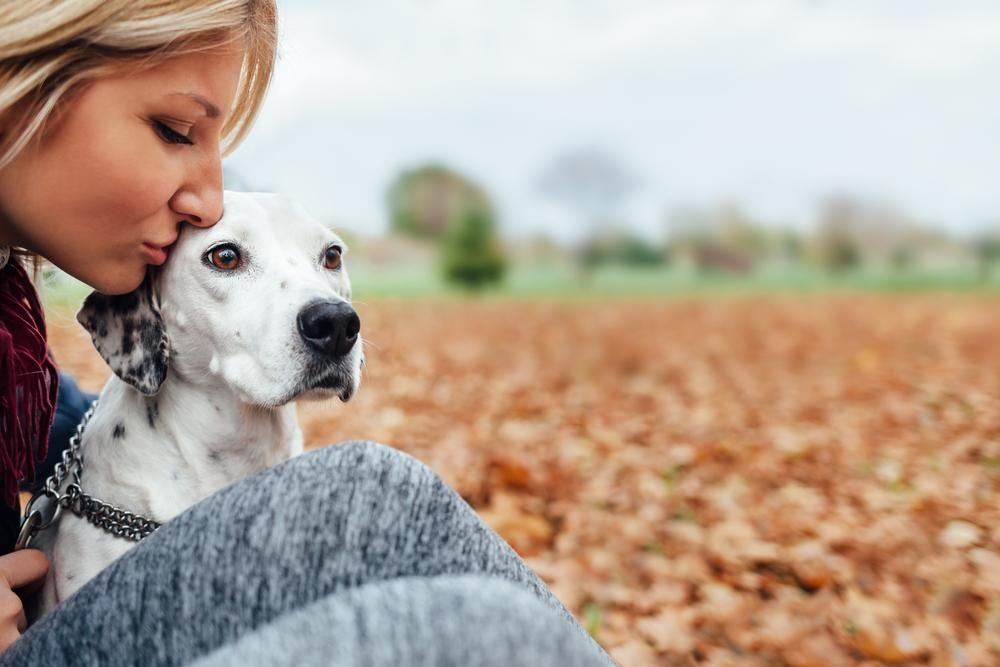 Is Your Dog Overprotective? | For the Pets | Dogs, Training