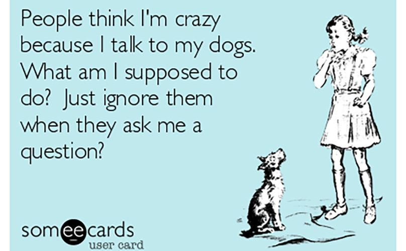 Dogs are made of fur, snark and sass. Mostly sass.