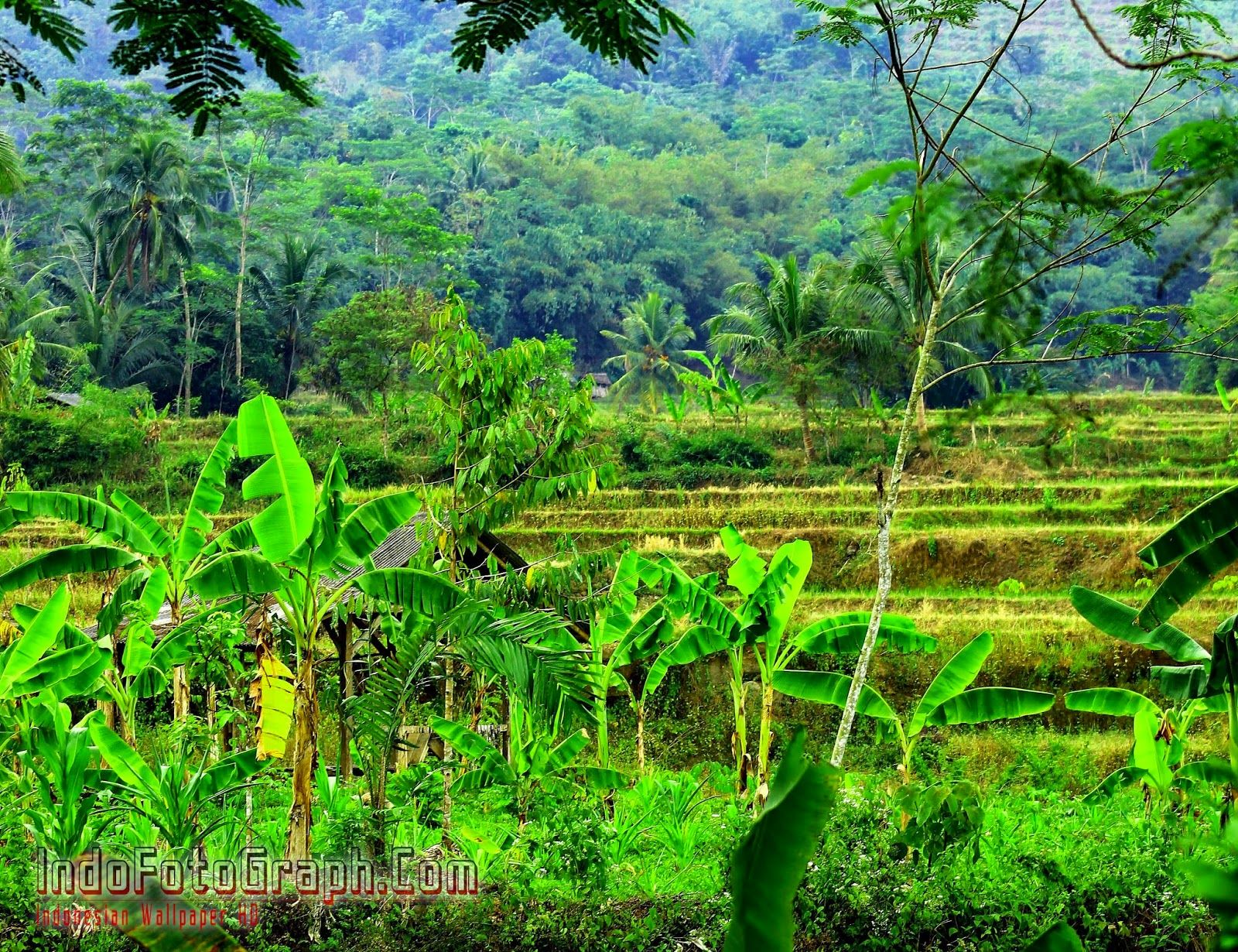 "download wallpaper pemandangan alam indonesia indofotograph coma""¢"