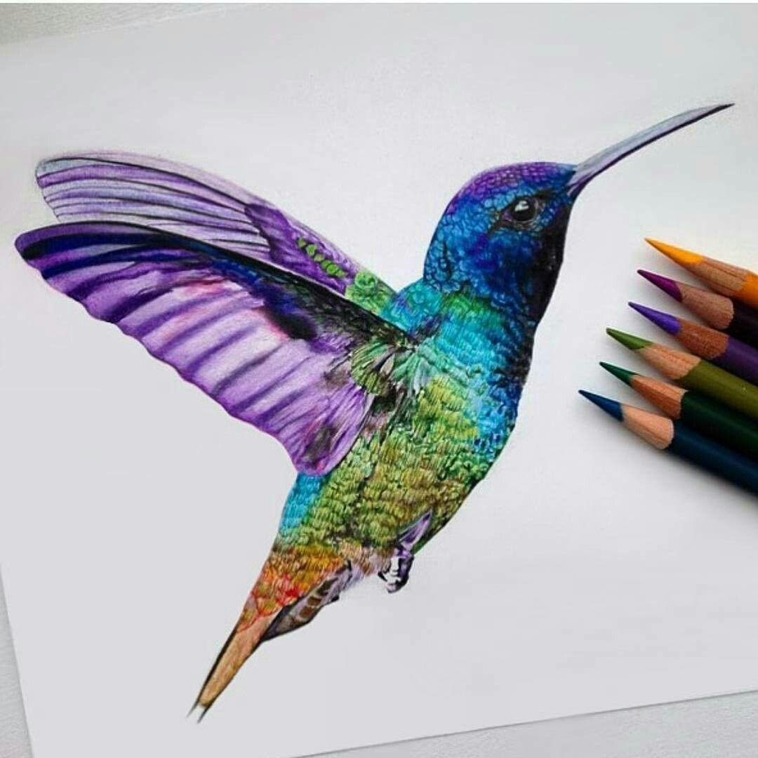 Pin De Maria Hernandez En Aves Fotos De Colibri Aves De Colores