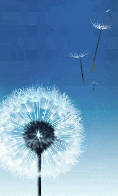 Samsung Galaxy S3 Stock Wallpapers
