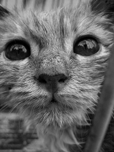 Baths Happen: 10 Photos of Soggy Kitties | Catster