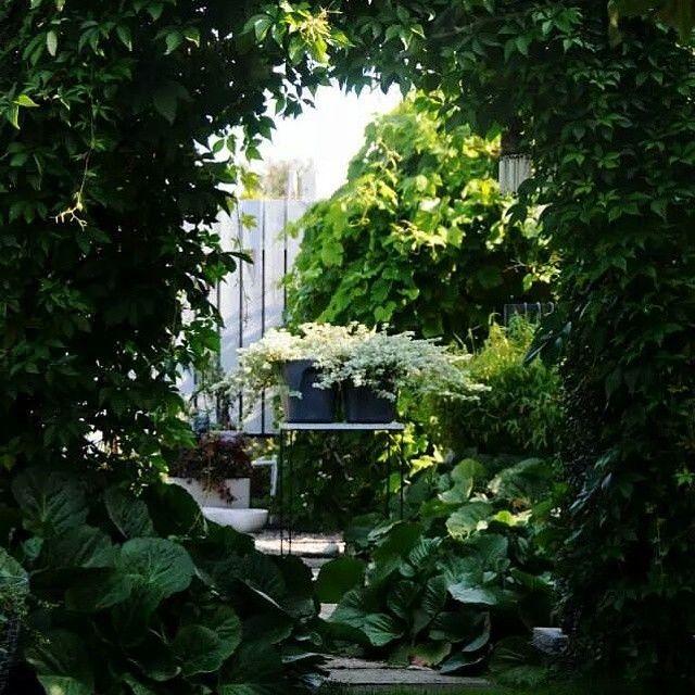 Trädgårdsfröjd