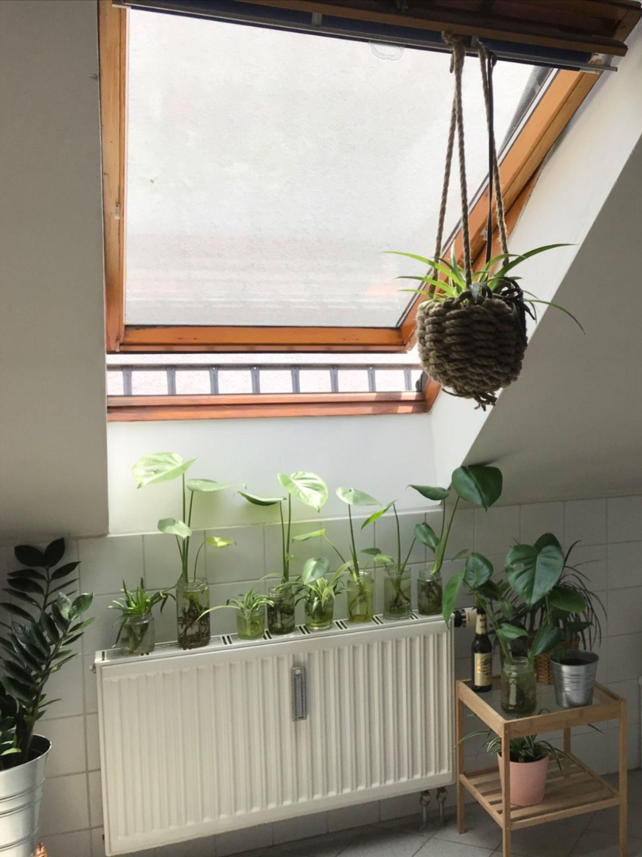 Badezimmer Pflanzen In 2020 Schone Badezimmer Badezimmer Tropische Pflanzen