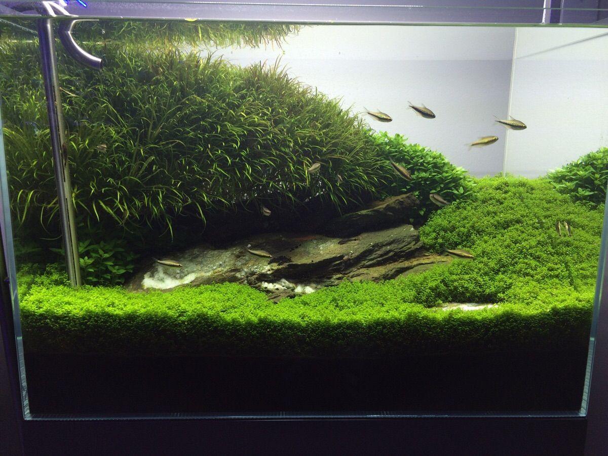 Aquarium Design Group | Süßwasseraquarium, Aquarien ...