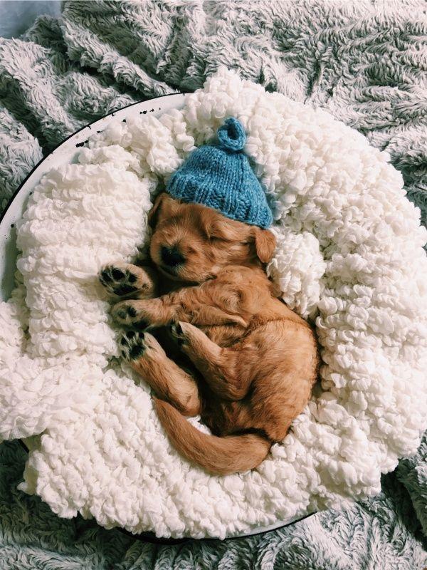 Schöne Träume. #cutepuppies