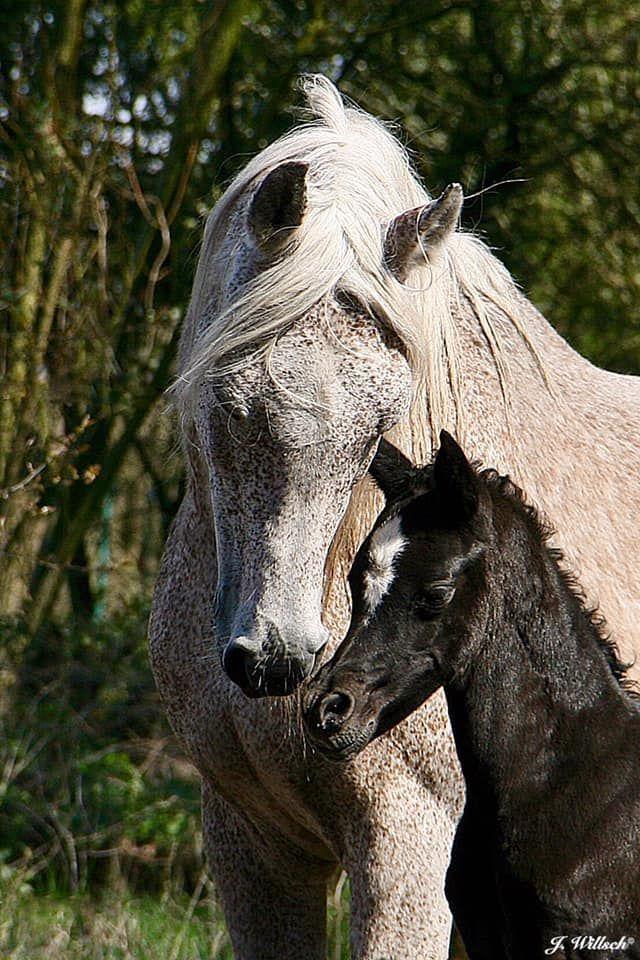 Pin Von Christiane Auf Pferde Pferde Schöne Pferde Und
