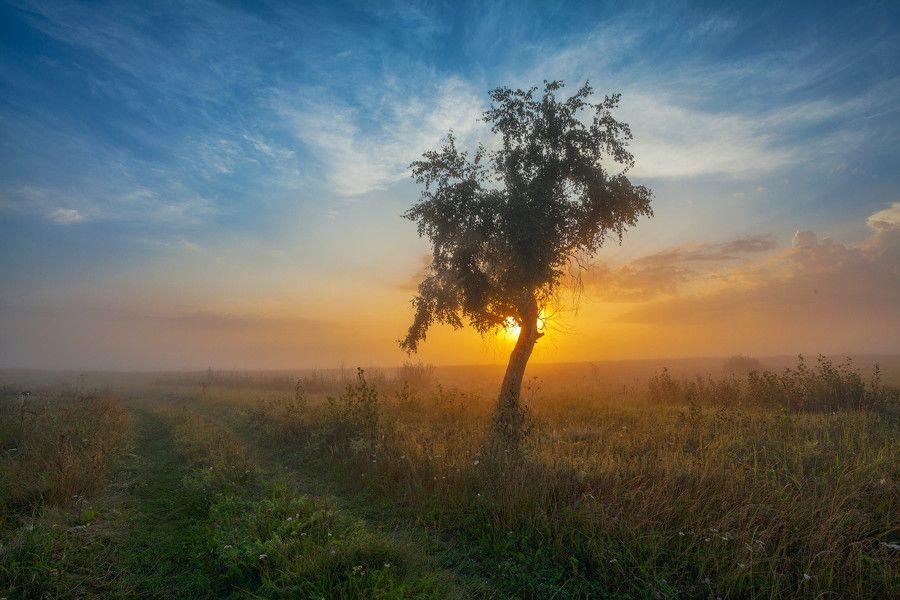 by Danil Romodin
