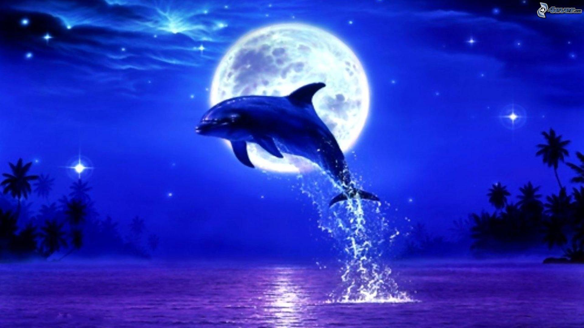 Dolfijn In Maanlicht Dolfijnen Dieren Mooi Oceaankunst