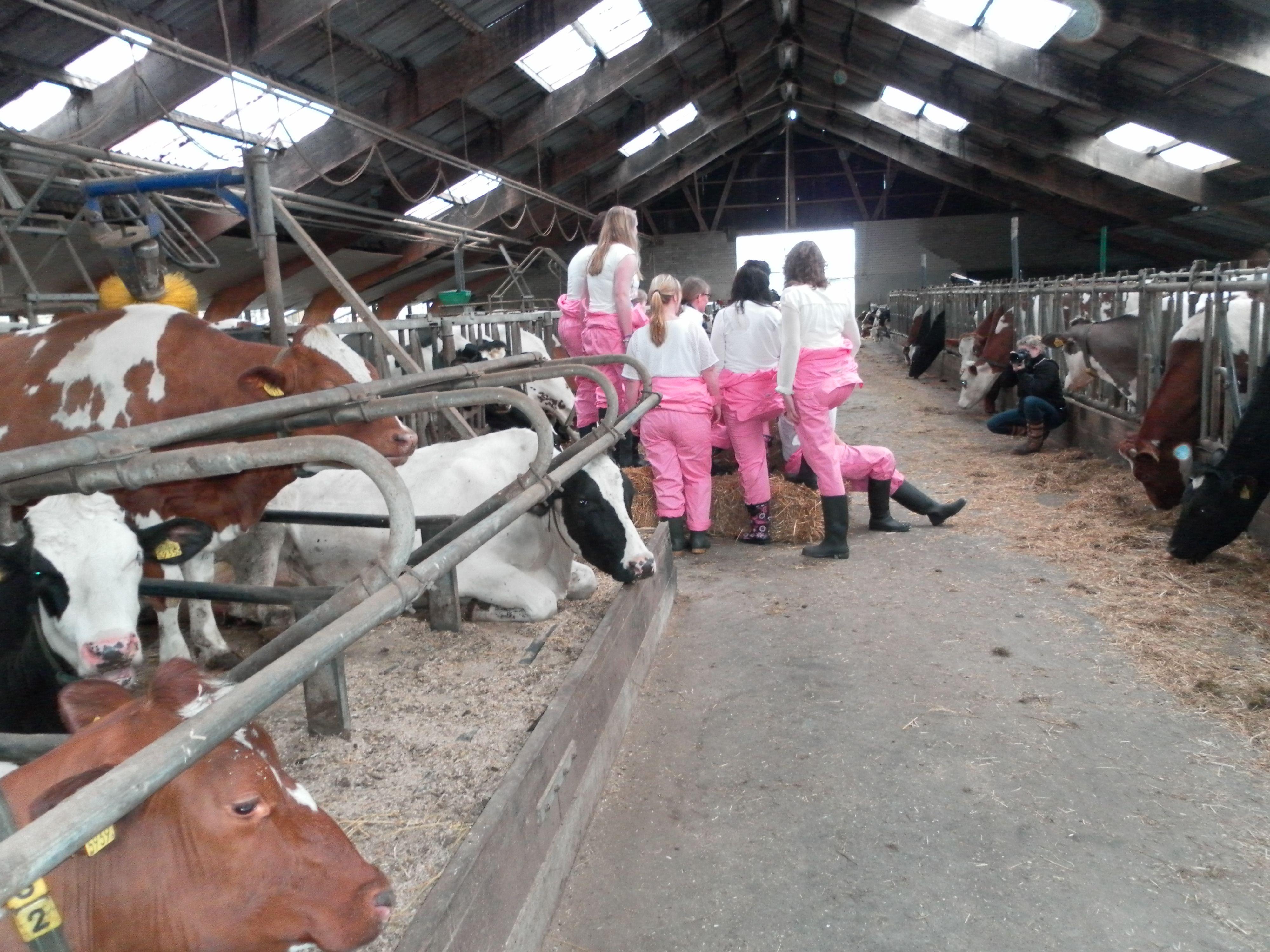 Vriendinnen uitje! Fotoshoot bij de Twentse Boerin. De koeien kijken nieuwsgierig toe en staan graag model.