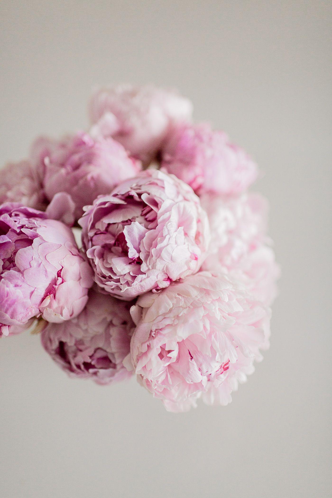 The Pink Peonies pink peonies | life / floral & garden | pinterest | peony, flowers