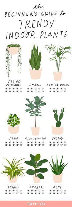 Photo of The Beginner's Guide to Trendy Indoor Plants