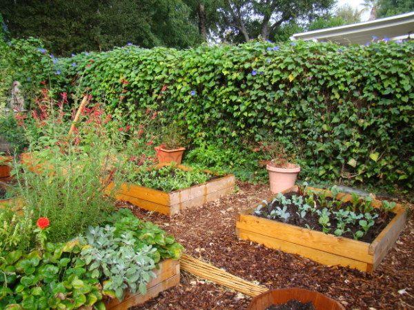 Urban Farming in Southern California | Urban farming ...