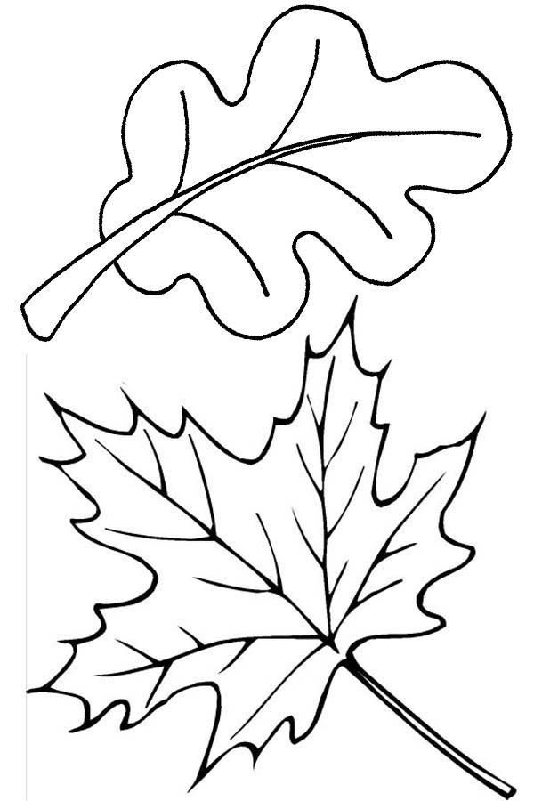 How To Draw Leaves Coloring Pages In 2020 Kleurplaten Herfstbladeren Stippatronen