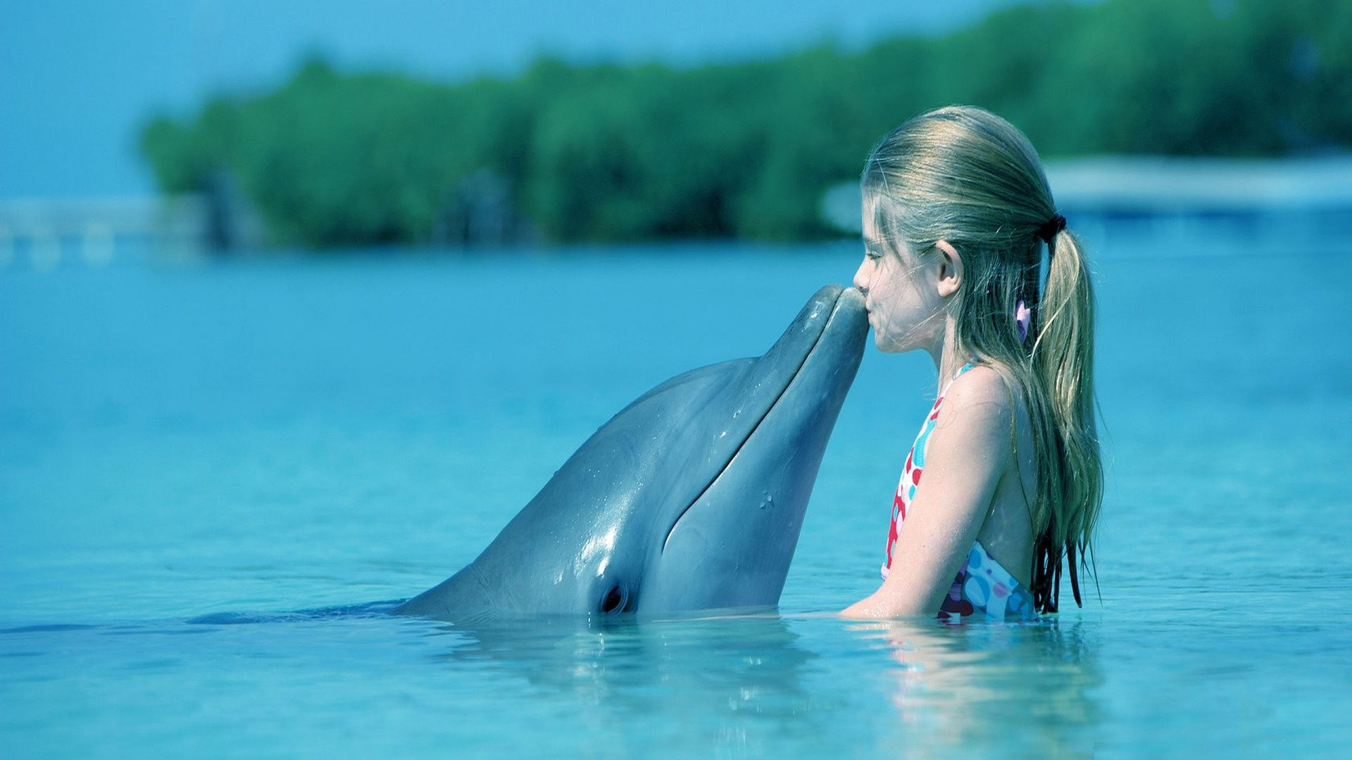 Http Screativeimage Com Data Images Out 1 8766987 Dolphin Jpg Most Beautiful Horses Dolphins Beautiful Horses