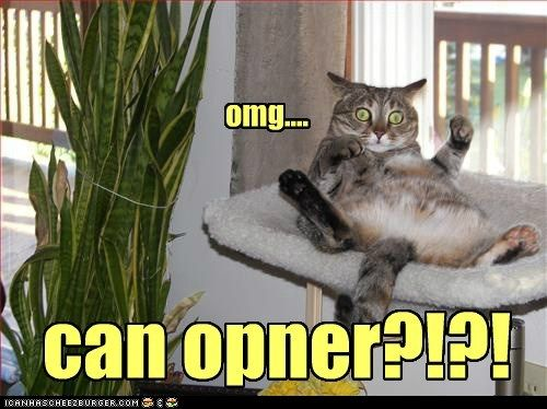 funny cat pictures - can opner?!?!