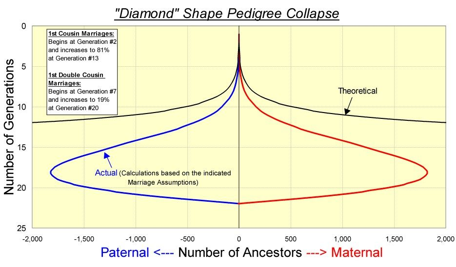 Diamond Pedigree Collapse -- How the shape of your genealogy expands & contracts with increasing occurrence of cousin marriages the further back you go.