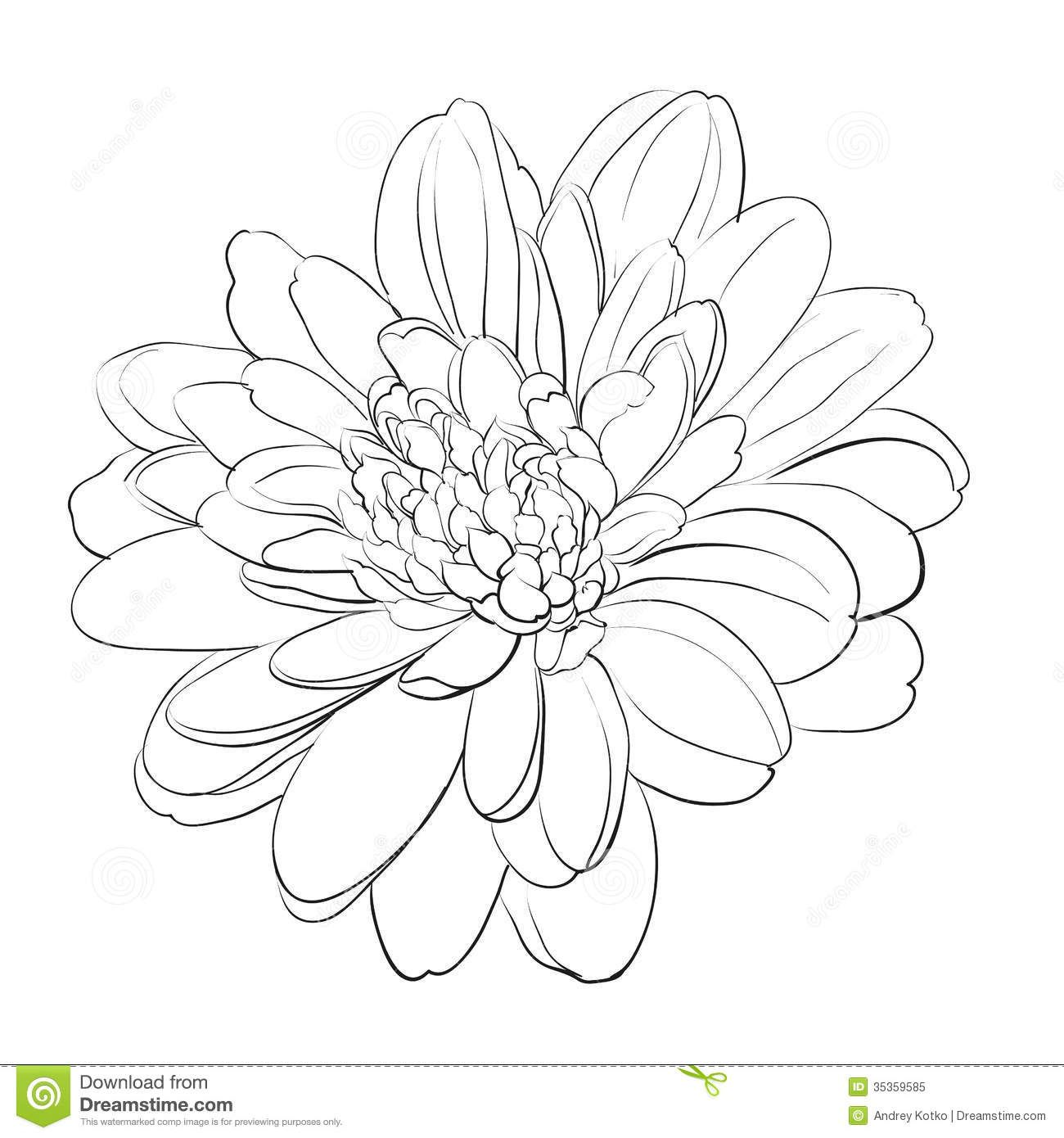 Chrysanthemum Yellow Or Yellow Golden Orange November Birthstone Citrine Chrysanthemum Drawing Flower Drawing Chrysanthemum Tattoo