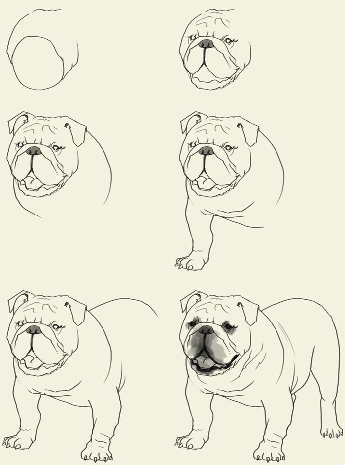 how-to-draw-bulldog | 스케치 | Pinterest | Videos, Augen und ...