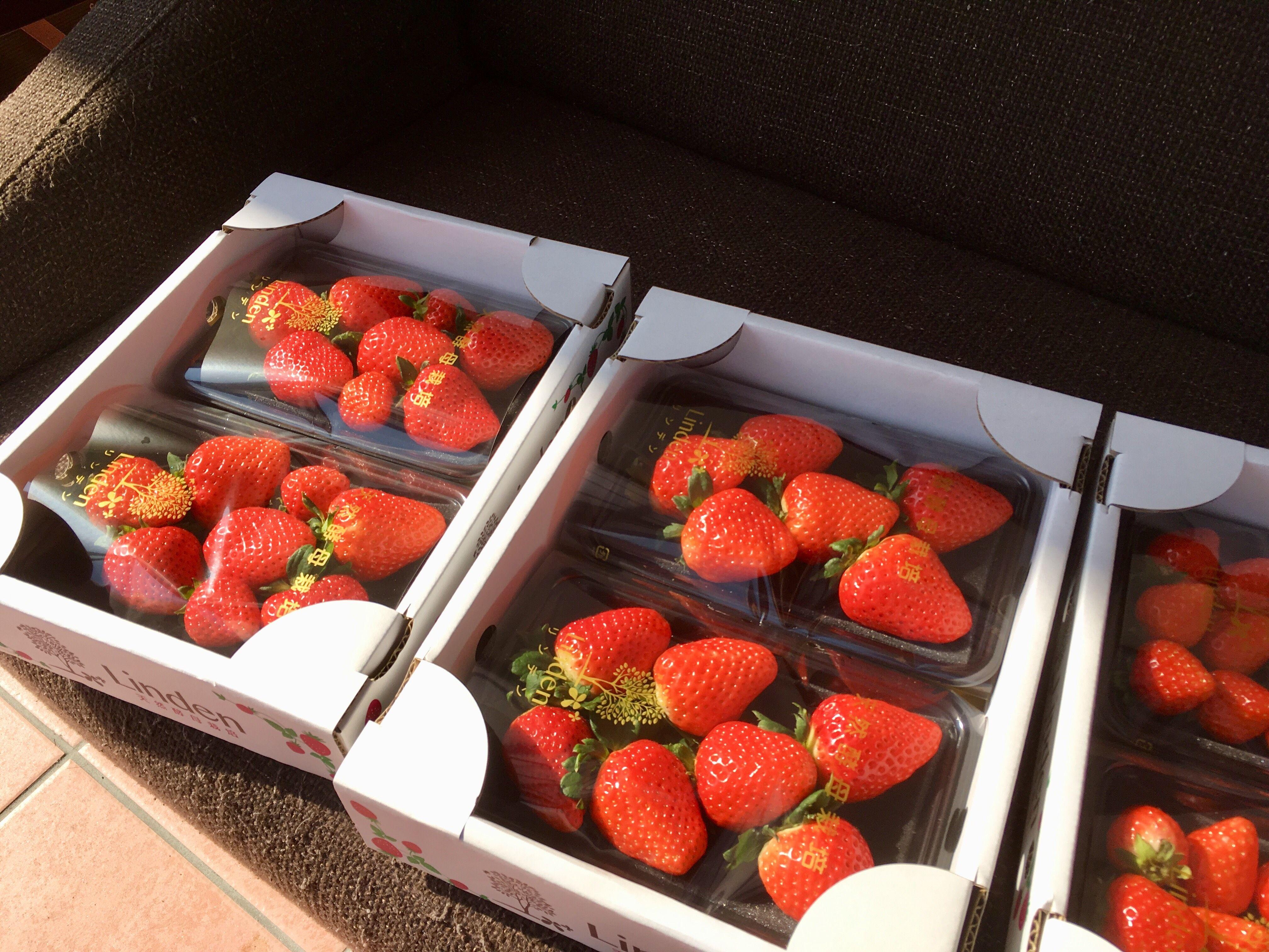 小倉南区 苺 いちご イチゴ 美味しい食べ物 イチゴ いちご