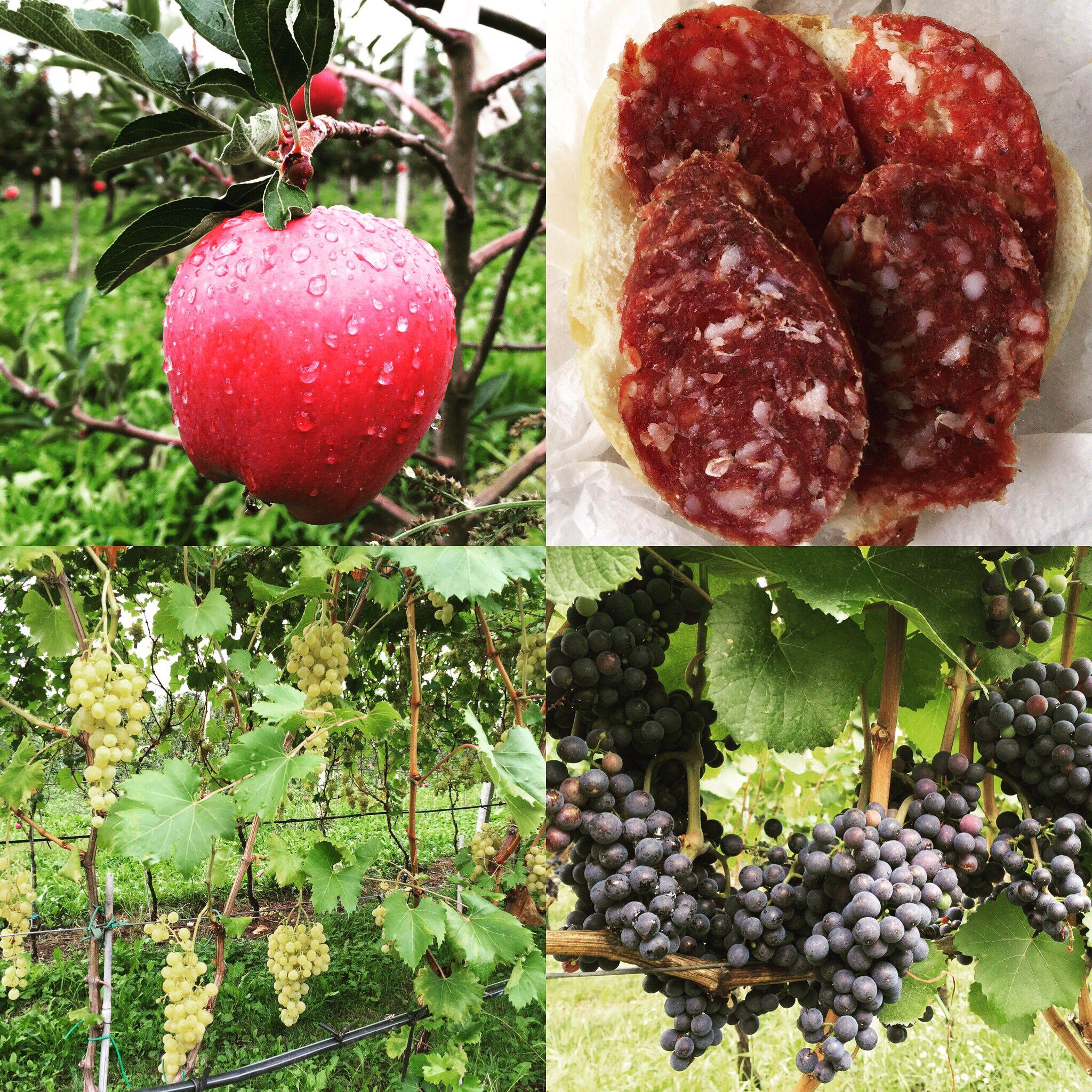#Trentino #salame di #cervo, #puzzone di #Moena e acqua di #Montagna. Immersi nella #vite di #Pinot grigio e nero.