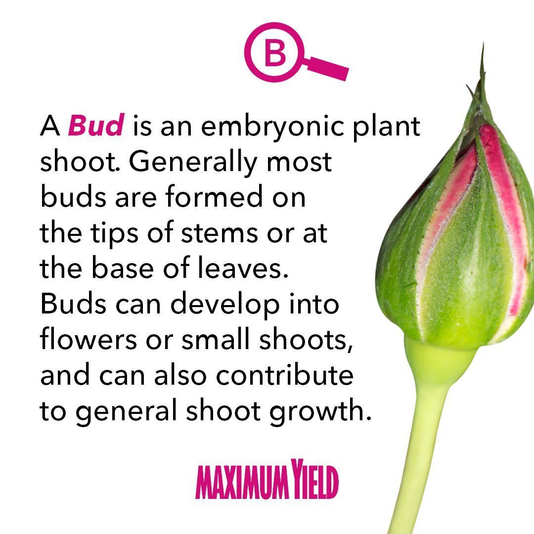 Bud Bud, Botany, Plants