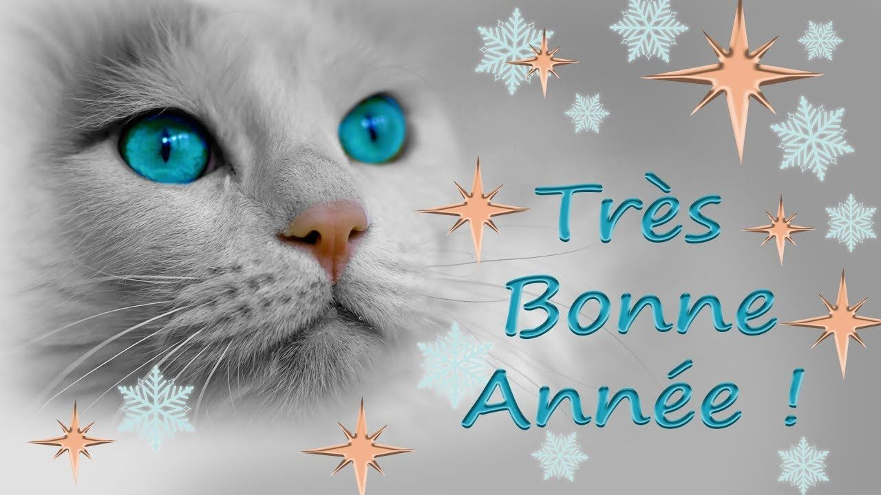 Carte de v ux bonne ann e 2019 chats chatons chaton noel animal mashups happy new year - Images animaux gratuites ...