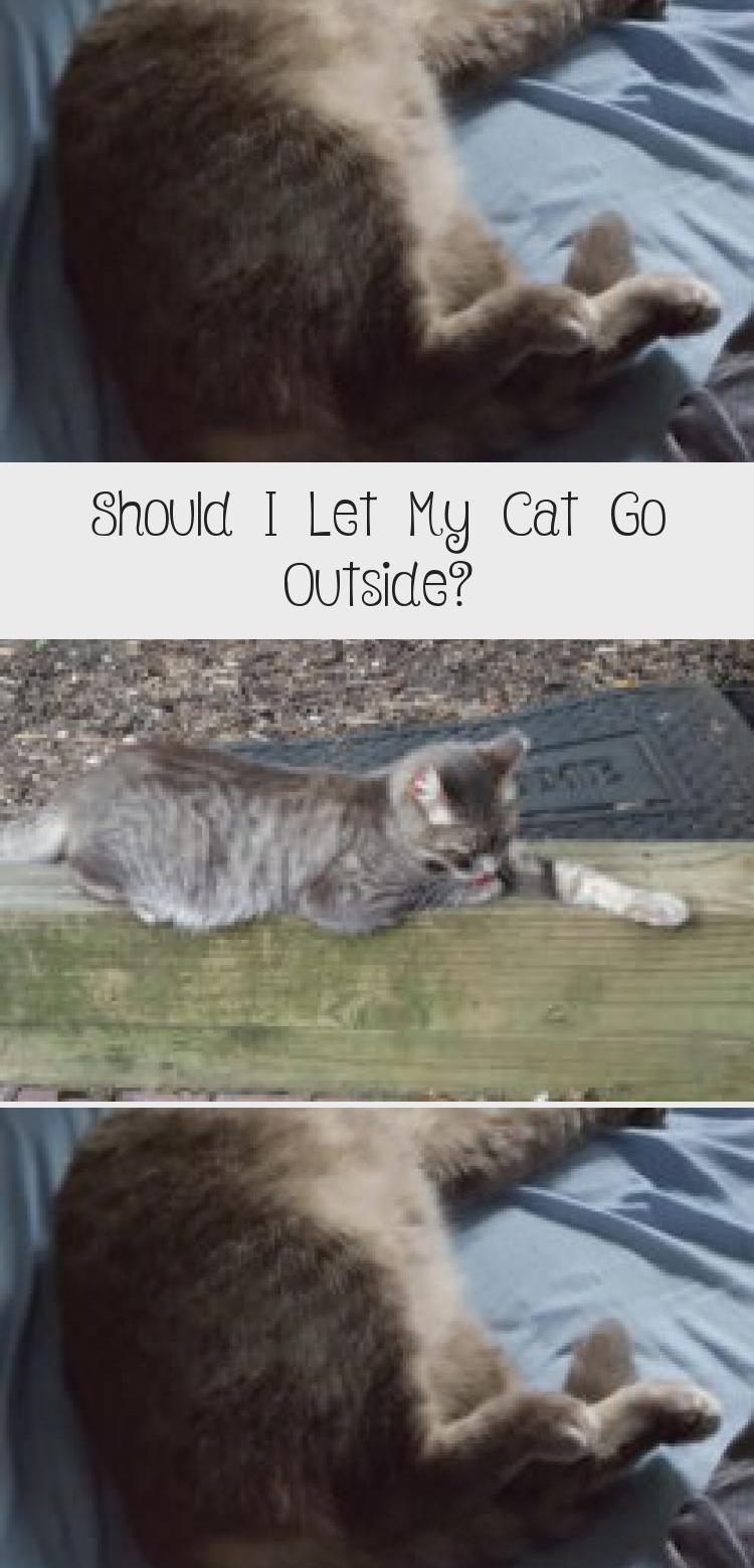 My Blog En Blog Cat Playground Cats Cat Adoption