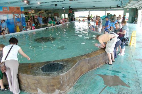 Stingray Bay Columbus Ohio Zoo Stuff To Try