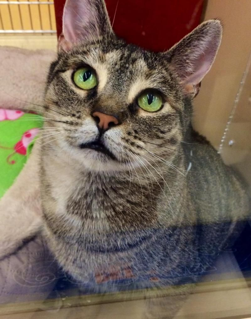 Adopt Rosa on Cute cats, kittens, Cats, Adoption