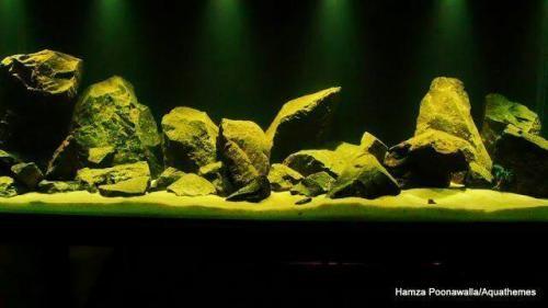 Black Heart..Deep Dark Lake Malawi Biotope.   Hydra Forum - HydraForum.com