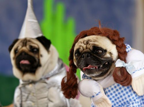 Pugs Dressed As Movie Characters For Halloween Dog Costumes Pet Costumes Dog Halloween Costumes