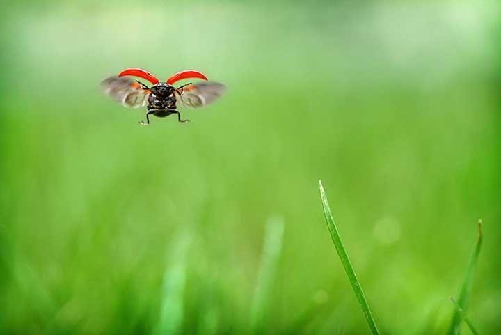 Ladybug Ladybug Fly Away Home Limate Change Could Be A Leading