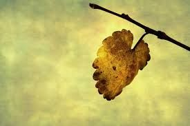the last leaf analysis