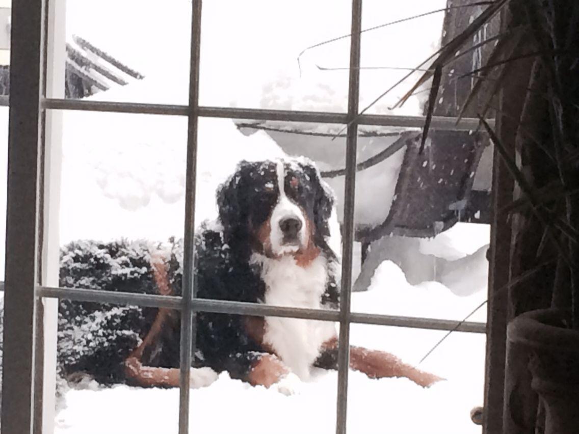 Snow chillin